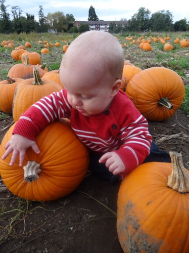 Visiting the pumpkins at Garsons PYO