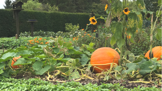 What we plan on doing this autumn in Surrey